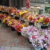 Flowers at the St. Paul Farmers' Market.