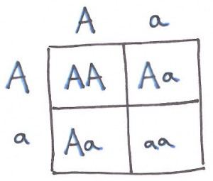 Punnett Square by Lindsay Lelivelt.